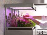 Gyógynövényekhez - Fűszernövényekhez LED világítás