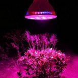 Zöld növényekhez - Szobanövényekhez LED világítás